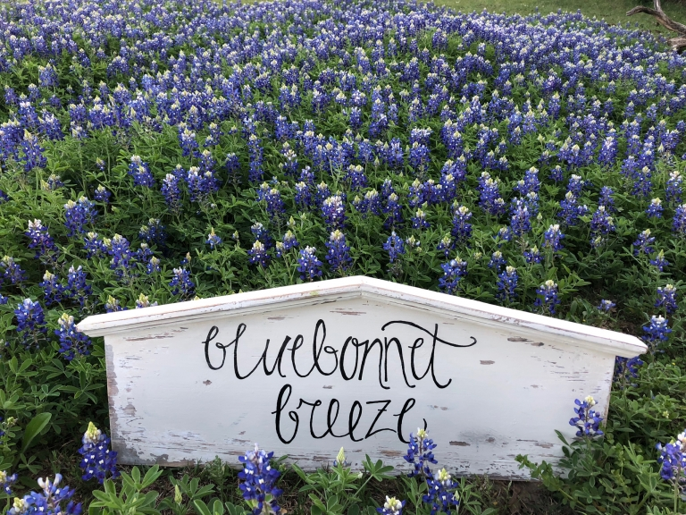 bluebonnet breeze ranch