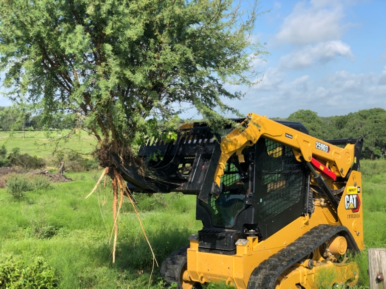 removing huisache roots